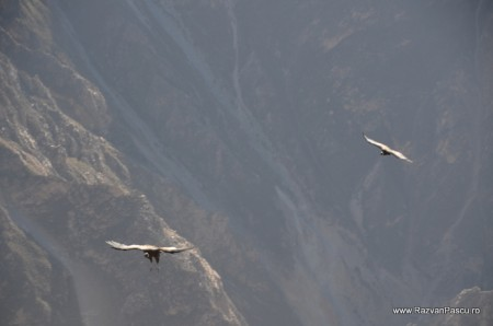 Canionul Colca si Valea Chivay, Peru 33