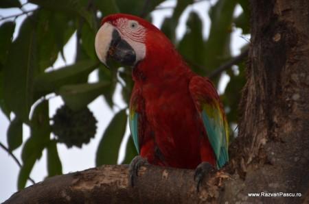 Peru, Amazon jungle 15