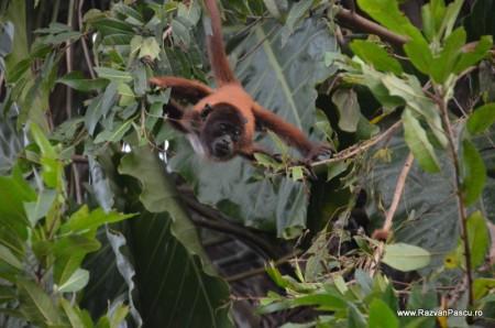 Peru, Amazon jungle 17