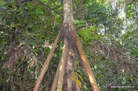 Peru, Amazon jungle 22