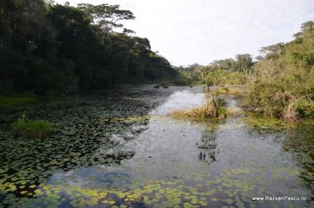 Peru, Amazon jungle 23