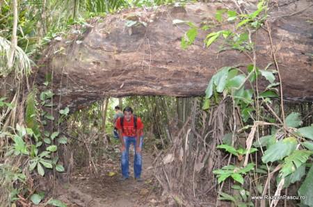 Peru, Amazon jungle 25