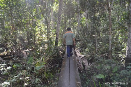 Peru, Amazon jungle 3