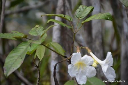 Peru, Amazon jungle 36
