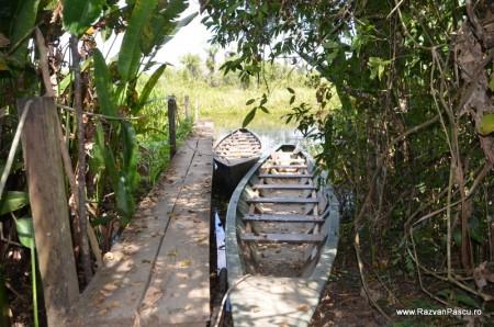 Peru, Amazon jungle 37