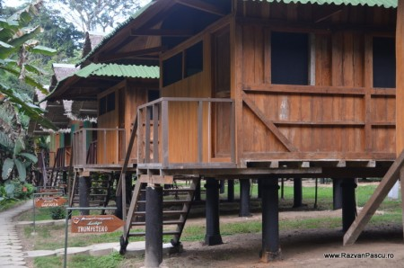Peru, Amazon jungle 38