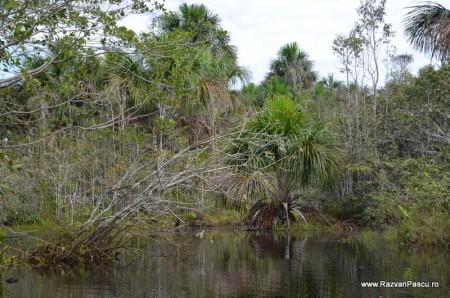 Peru, Amazon jungle 7