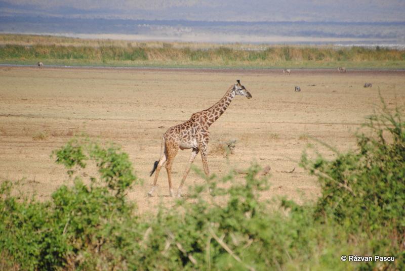 Safari in Tanzania si plaja in Zanzibar 38