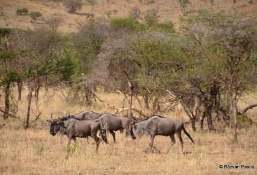 Tanzania 11