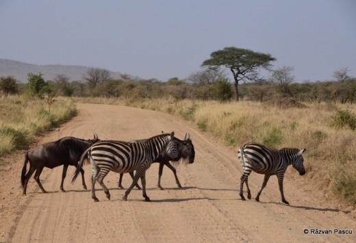 Tanzania 12