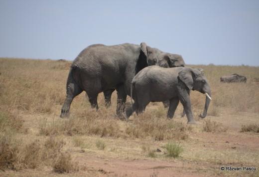 Tanzania 18