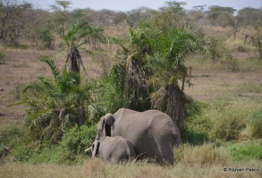 Tanzania 6