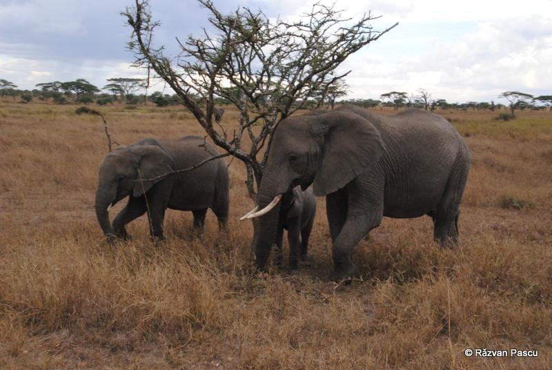Tanzania 7