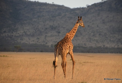 Tanzania 9