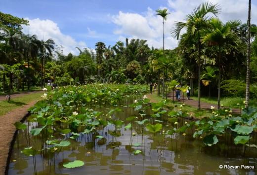 Mauritius fotografie 35