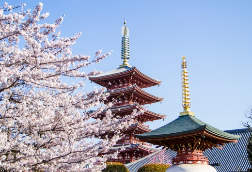 Japanese pagodo with cherry blossom view.