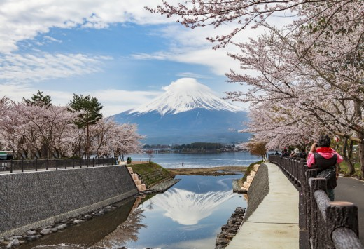 Mount Fuji, Cherry blossom, Japan