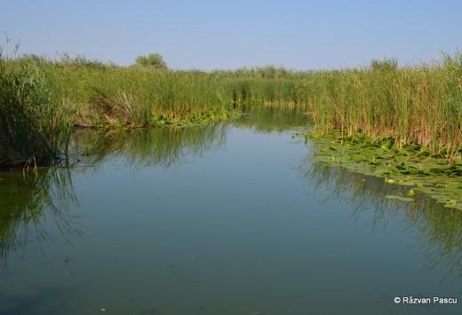 Delta Dunarii, Uzlina, Cormoran 23