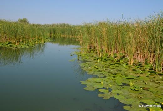 Delta Dunarii, Uzlina, Cormoran 24