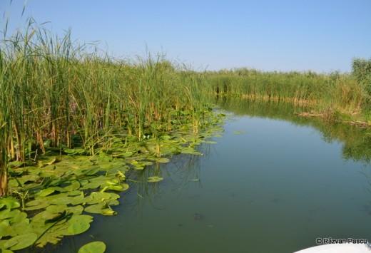 Delta Dunarii, Uzlina, Cormoran 25