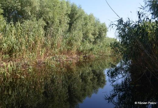 Delta Dunarii, Uzlina, Cormoran 29