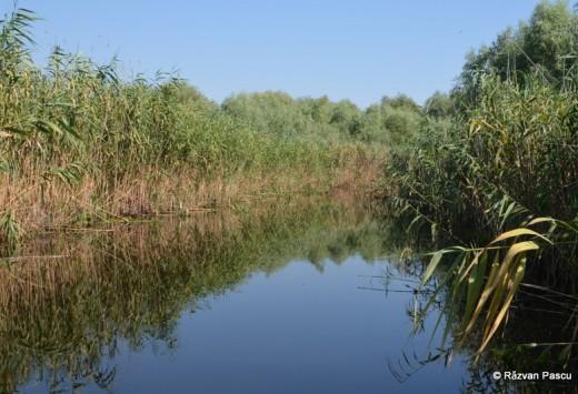 Delta Dunarii, Uzlina, Cormoran 30