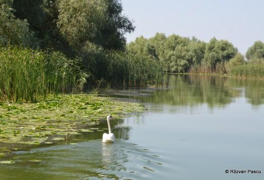 Delta Dunarii, Uzlina, Cormoran 33