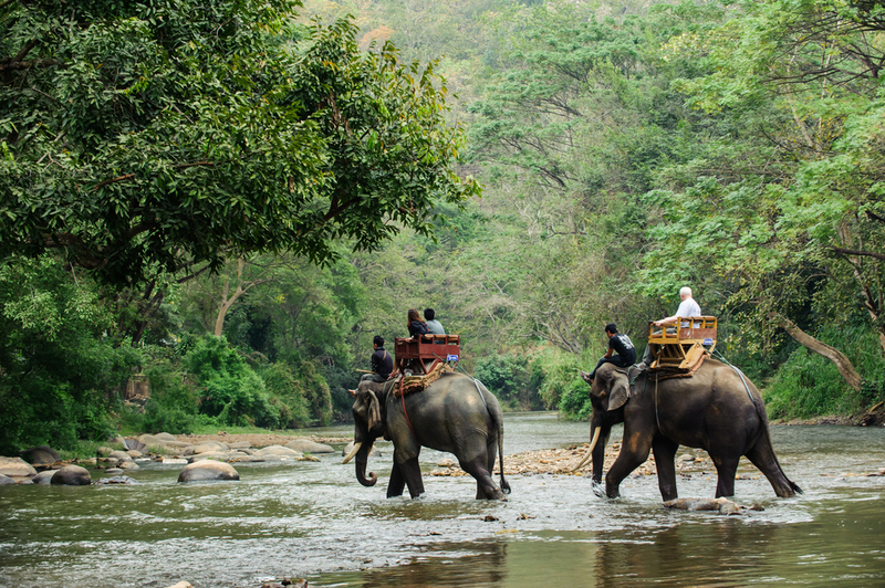Elephant trekking through jungle in northern Thailand, Copyright Somchai Siriwanarangson