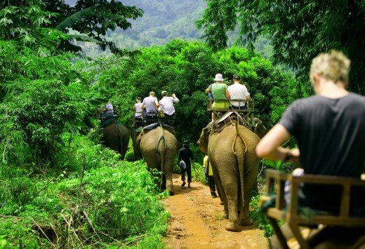 Tourist group rides through the jungle on the backs of elephants, Copyright Ben Heys