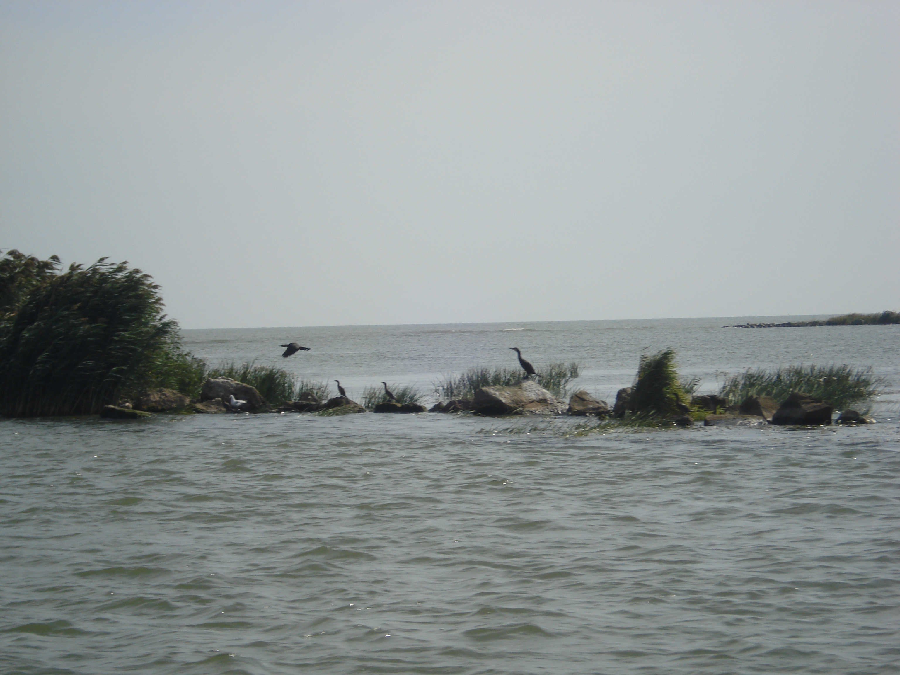 Varsarea Dunarii