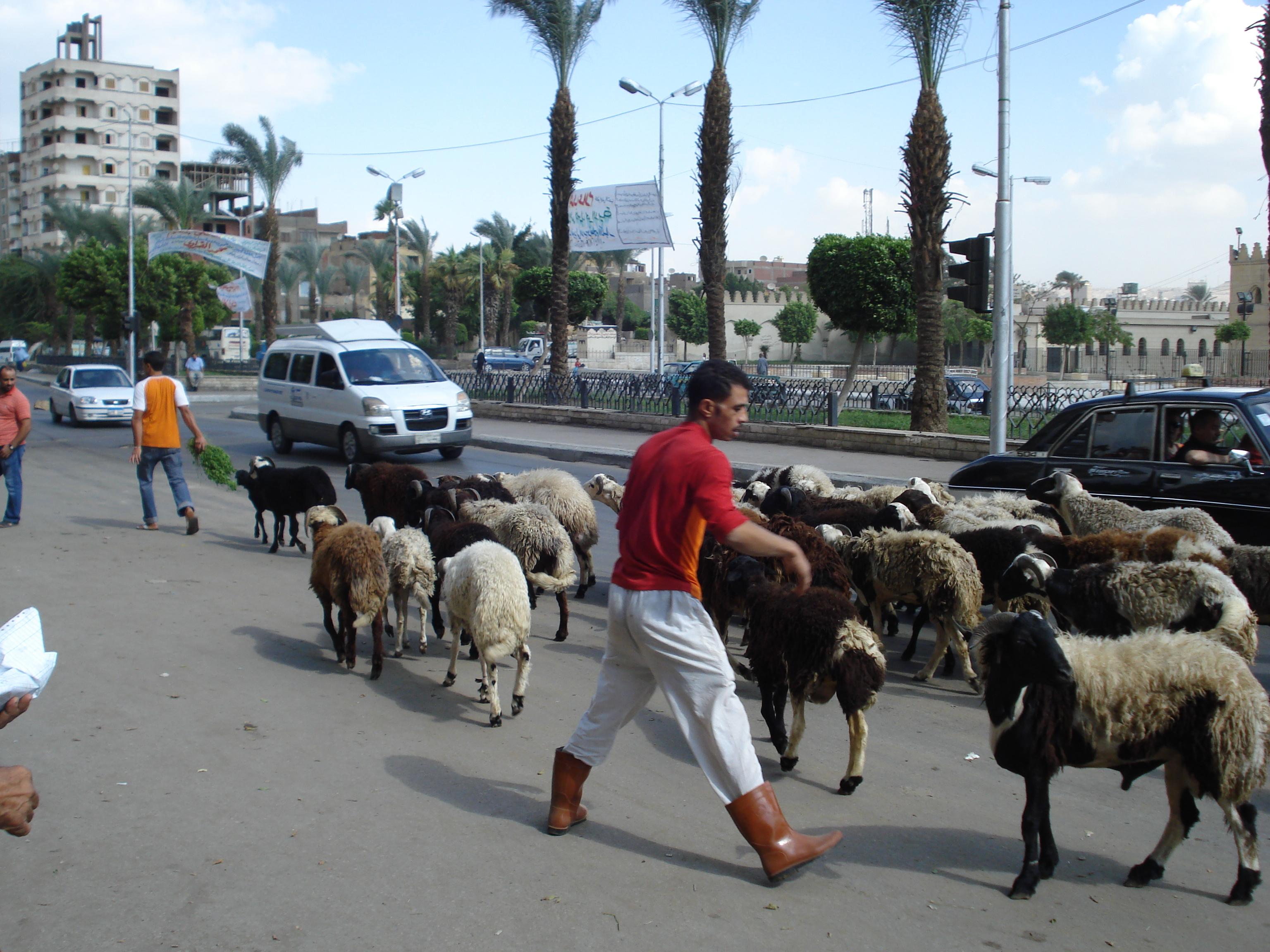 Adevaratul Cairo